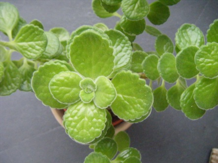 succulents 004