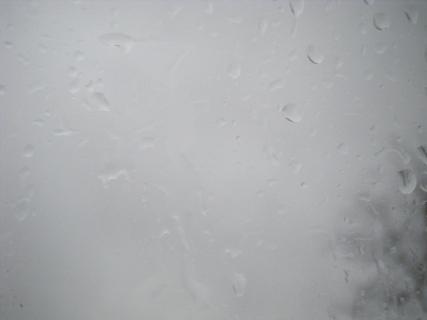 twigs and rain 023.JPG